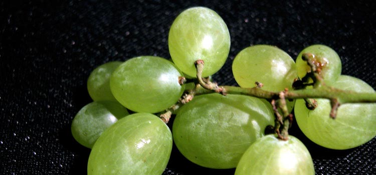 grapes-vs.-grapes-differences
