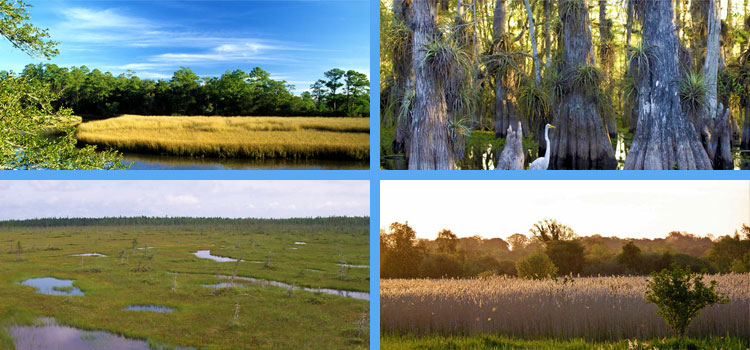 What is the Difference Between Marsh and Swamp